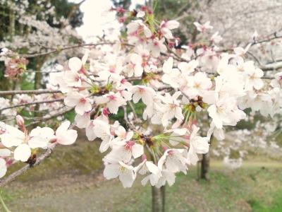 お花見とバーガーとハンドメイドと♪_a0169912_1144952.jpg