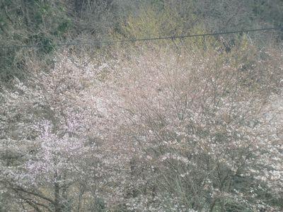 春はすぐそこ_b0131012_22131931.jpg