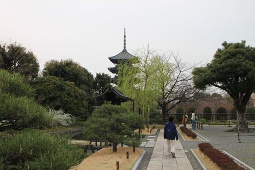 東寺でも咲き始めた_e0048413_2175881.jpg
