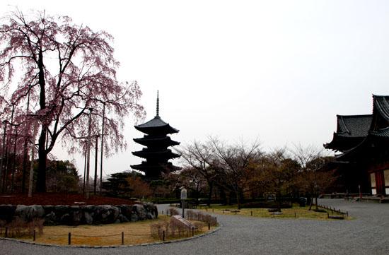 東寺でも咲き始めた_e0048413_2181223.jpg