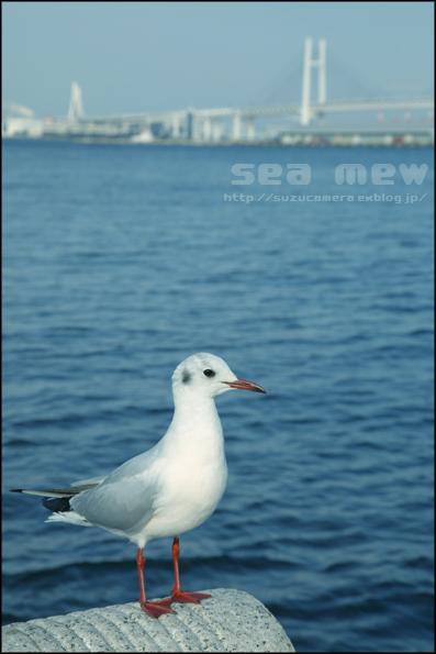 鳥のはなし_f0100215_0485597.jpg