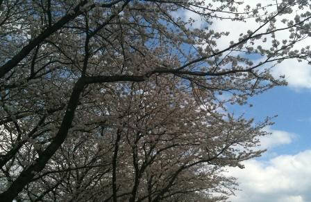 春よ、来い。_d0070316_16351396.jpg