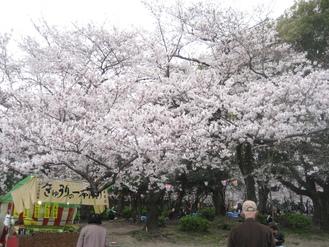 花見~鶴舞公園~_e0095418_1952387.jpg
