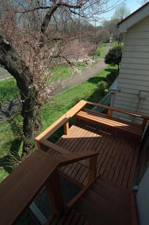 桜のオープンハウス_b0038919_10512270.jpg