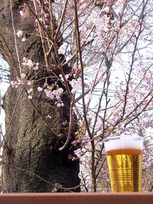 桜のオープンハウス_b0038919_1056517.jpg