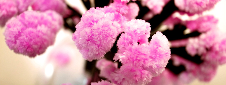 隨日本的櫻季一同綻放──Magic櫻_c0073742_2356193.jpg