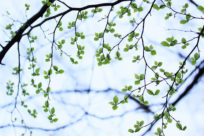 -green applause-_a0122544_19561657.jpg