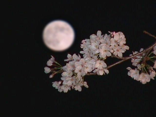満月前夜の予感_c0156749_20115661.jpg