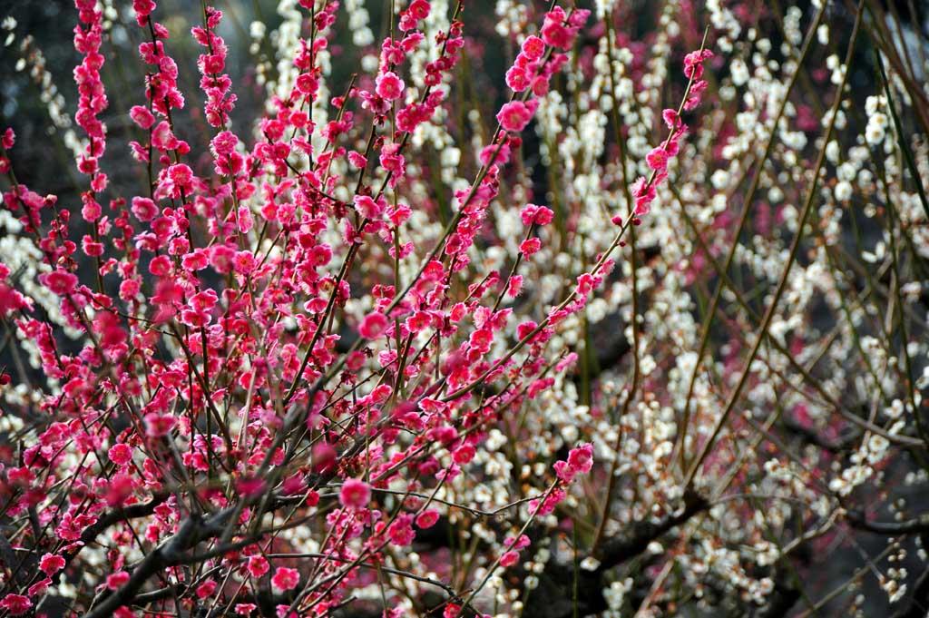 花の命は短くて_e0024958_16144786.jpg