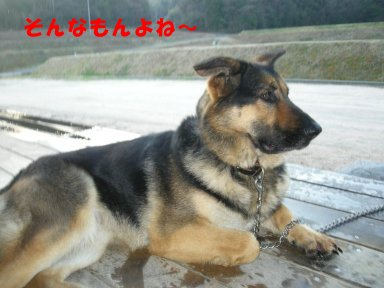 b0113663_13103567.jpg