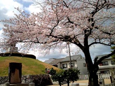 京都さくらたより_b0153663_14481318.jpg