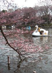 桜メモ(井の頭公園)_b0003474_821296.jpg