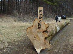 信州諏訪の御柱祭ももうすぐ!_f0141975_14322935.jpg