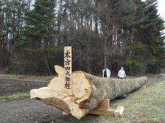 信州諏訪の御柱祭ももうすぐ!_f0141975_1432501.jpg
