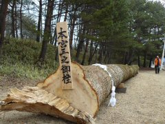 信州諏訪の御柱祭ももうすぐ!_f0141975_14343045.jpg