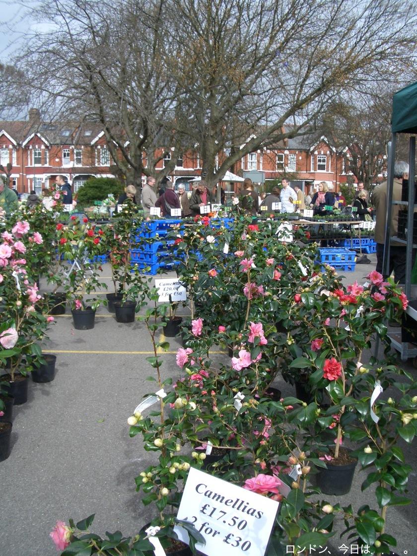 Spring flower fair_a0137487_23405473.jpg