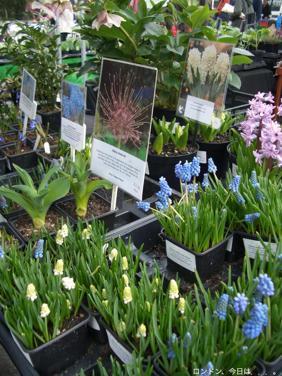 Spring flower fair_a0137487_2345987.jpg