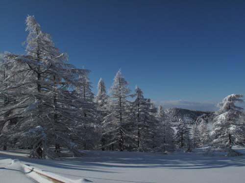 雪景色の池ノ平湿原_e0120896_11113556.jpg
