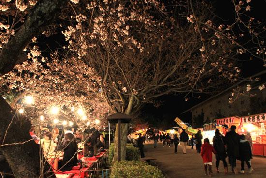 円山公園 夜桜_e0048413_20485864.jpg