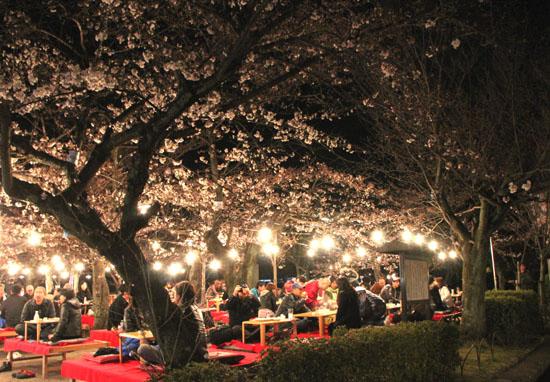 円山公園 夜桜_e0048413_20491986.jpg