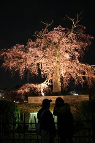 円山公園 夜桜_e0048413_20493615.jpg