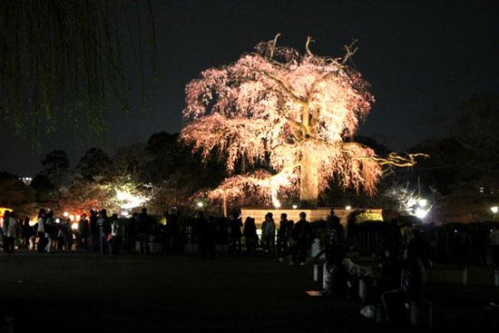 円山公園 夜桜_e0048413_2049533.jpg