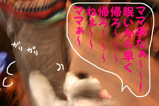 b0130018_17235236.jpg