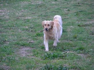 お散歩中にパグちゃんに出会うとテンションが上がる_a0159640_19211845.jpg
