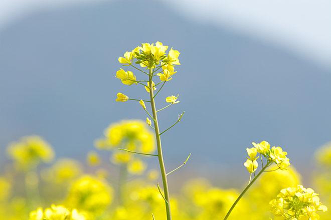 Vitamin Yellow_c0067040_22494646.jpg