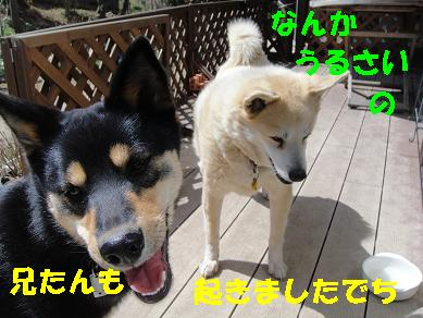 c0211642_1149466.jpg