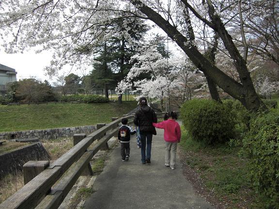 満開の桜でした!!_e0164643_2111092.jpg