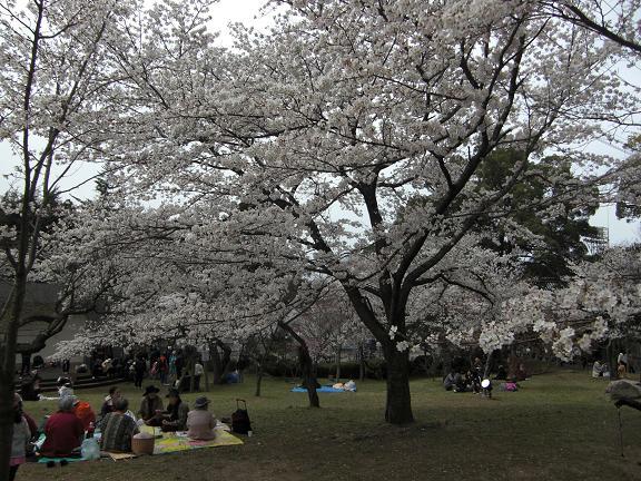 満開の桜でした!!_e0164643_2119861.jpg
