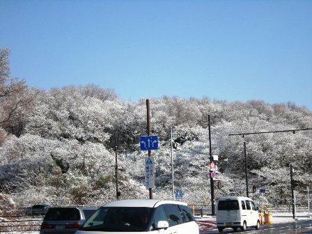 桜の木の雪化粧_f0196455_13105571.jpg