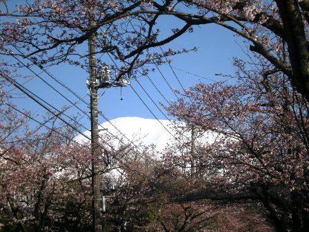 桜の木の雪化粧_f0196455_1372947.jpg