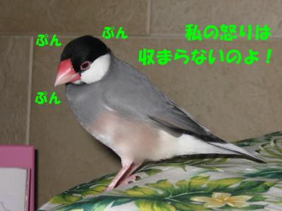 b0158061_21432566.jpg
