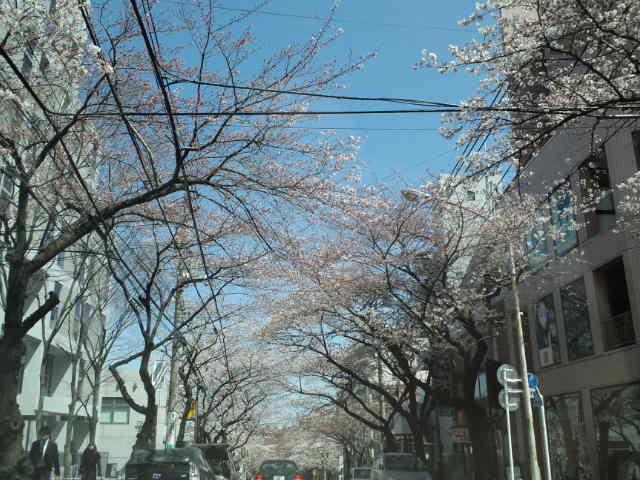 桜(-^〇^-)_c0151965_12503291.jpg