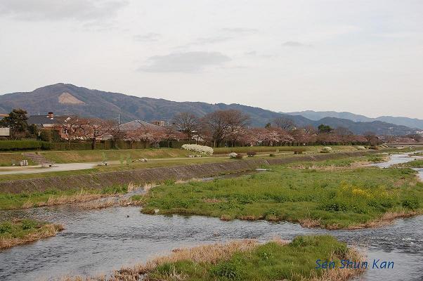 加茂川の桜_a0164068_22273917.jpg