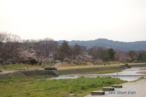 加茂川の桜_a0164068_22282860.jpg