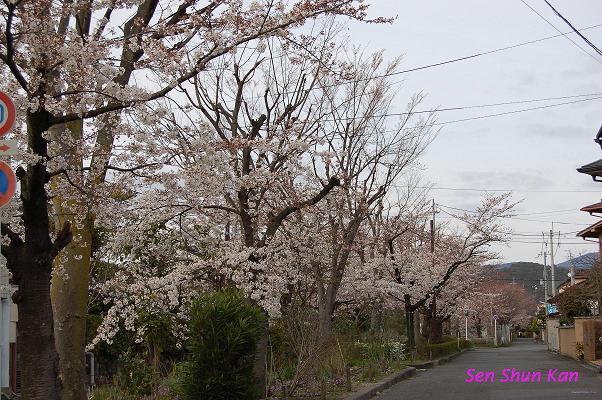 加茂川の桜_a0164068_22333061.jpg