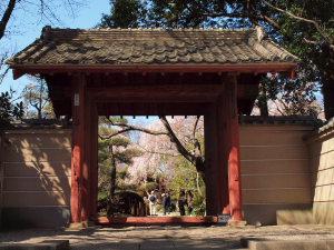 しだれ桜を見に川越まで..._a0027275_19585539.jpg