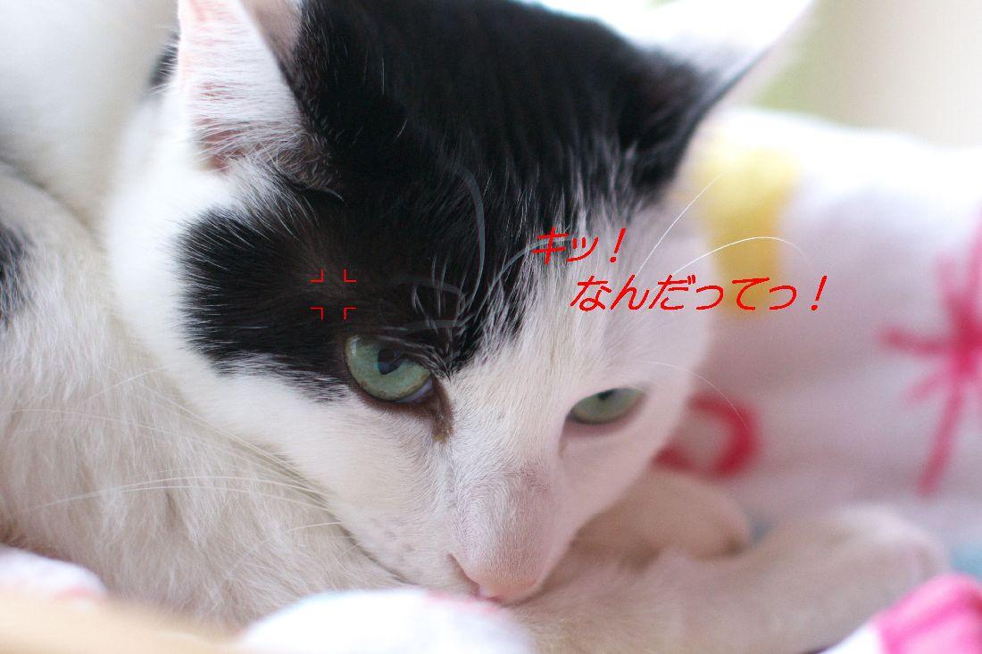 f0197682_2012169.jpg