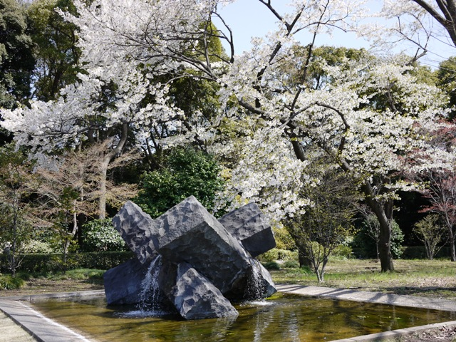 皇居東御苑の桜_a0127090_2143095.jpg