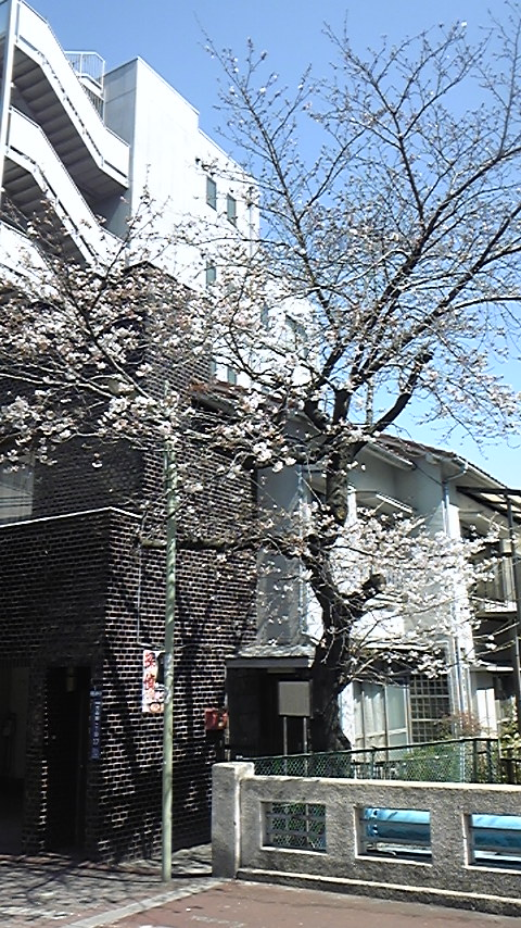 内川の桜。_a0112393_12584151.jpg