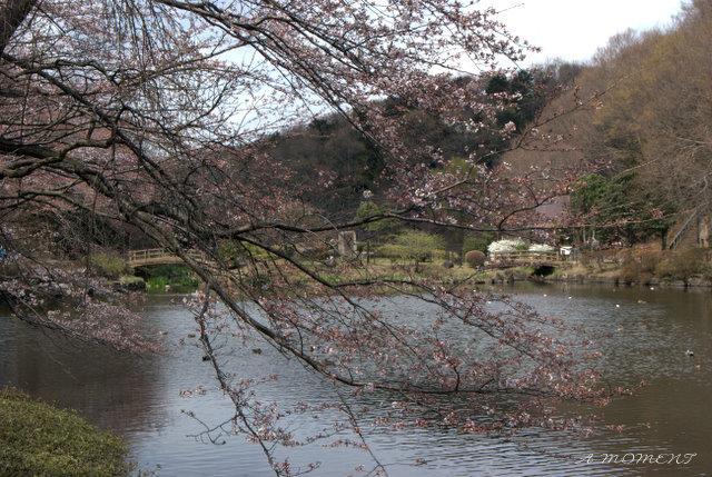 凍える心 春を待つ_f0147895_0534465.jpg