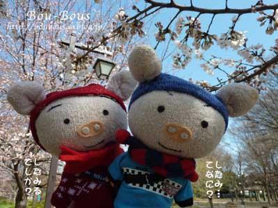 ぷちお花見_d0128697_1811359.jpg
