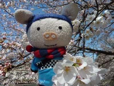 ぷちお花見_d0128697_18114616.jpg