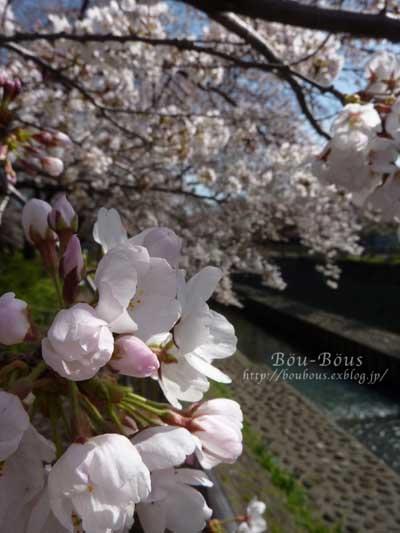 ぷちお花見_d0128697_18124547.jpg