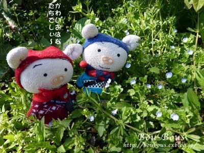ぷちお花見_d0128697_18189100.jpg