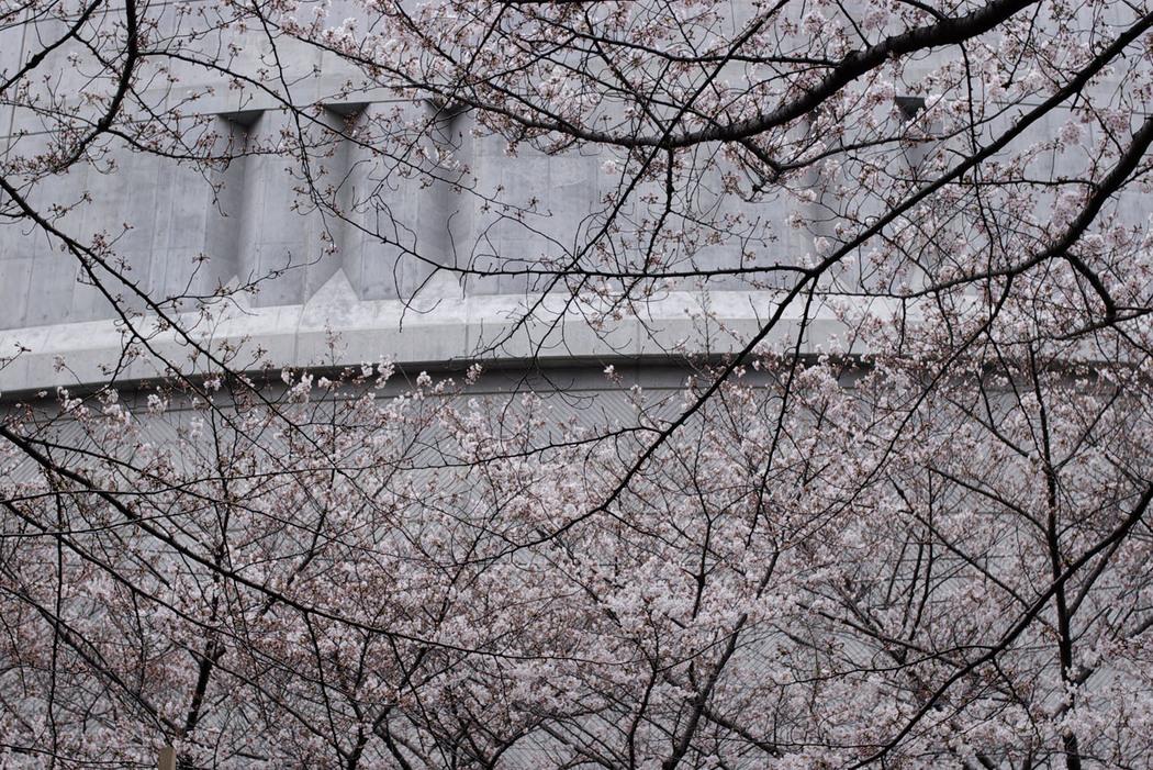 2010、目黒川の桜、その2。_c0120903_063771.jpg