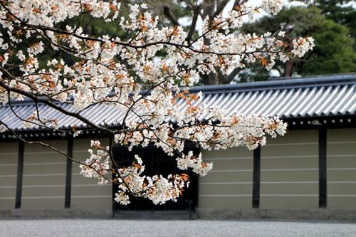 京都御苑 拾翆邸と山桜_e0048413_22391899.jpg